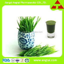 Youngest Dehydrated barley grass juice powder from GMP factory