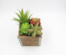 Wholesale Many Size Decoration Artificial Succulent Plants