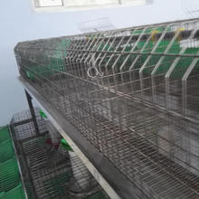 Breeding rabbit cages with tray and nipple drinkers