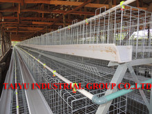 TAIYU Laying Hens Farm in Africa Poultry