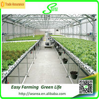 Hot sale used single-span hydroponic plastic greenhouse for vegetable