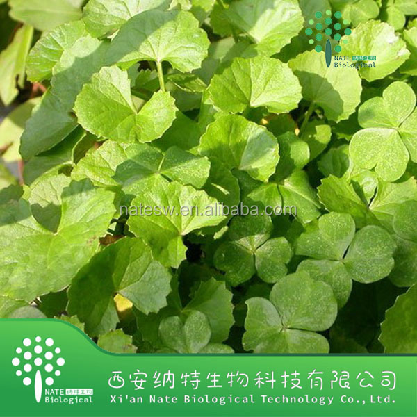 100% Natural Factory supply Best Price Gotu Kola Extract Powder 30% Asiaticoside