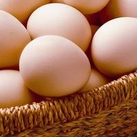 egg market prices suppliers best price