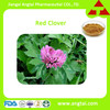 Cough Powder Red Clover Dry Extract Solvent Extraction