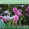 Pure Natural Lagerstroemia speciosa Extract | Banaba Leaf Extract | Banaba Extract from 3W