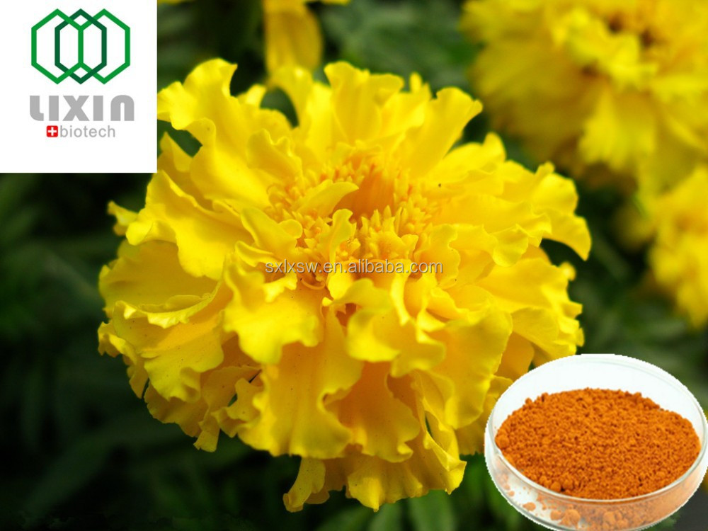 Natural Marigold flower Extract Powder Lutein , Zeaxanthin,Marigold Extract Capsule OEM