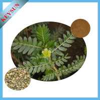 Tribulus Terrestris Extract Powder 60 Saponins