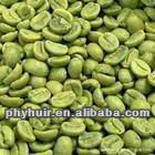 green coffee bean extract / Chlorogenic Acid