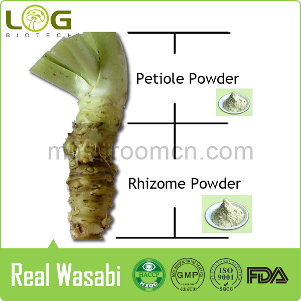 No Starch 100% Pure Real wasabi sushi powder
