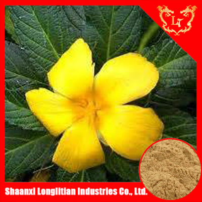 High Quality 4:1 damiana extract for men sexual enhancement