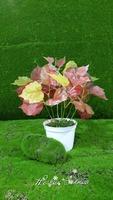 China manufacturing artificial small bonsai for home decor