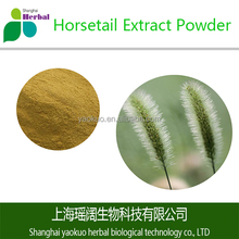 ISO HACCP KOSHER HALAL GMP Factory Supply Top Quality Horsetail Extract Powder