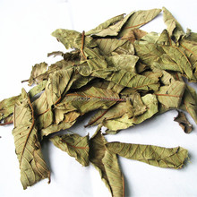 Fan Shi Liu Ye bulk herbal medicine Dried Guava Leaves