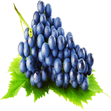 Factory wholesale grape seed / skin extract