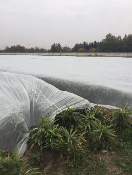 horticultural fabric 50-180gsm 100% pp nonwoven