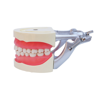 educational science dental teaching tooth brushing model