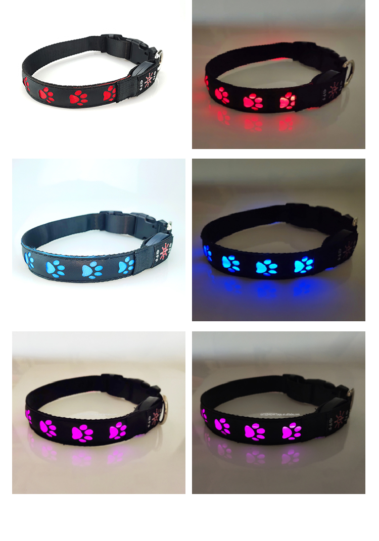 Free Sample Designer Luxury USB Rechargeable Pet LED Light Up Dog Collar with Buckle
