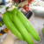 quality green banana / +84984418844