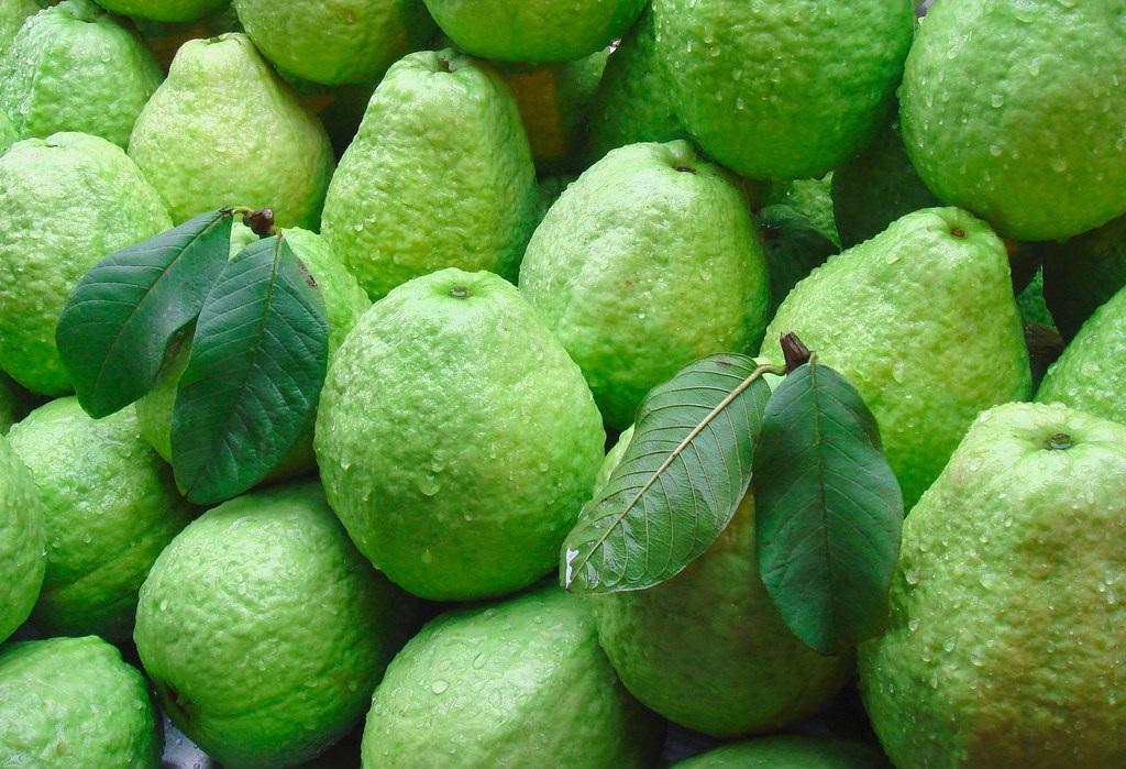 Guava Fresh Global Gap Circle Shape Taipei Brand Name Cultivation Type Organic Suitable For Customer Choice