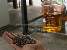 Hight Quality Jatropha Oil and Seed