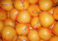Fresh Honey Pomelo and Other Citrius For Sale