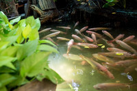 Water Probiotics that increase Fish Survival rate