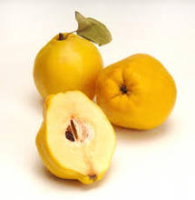 FRESH QUINCE FRUIT