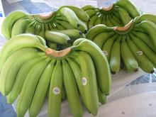 CLASS A / B GREEN CAVENDISH BANANAS AVAILABLE FOR SALE