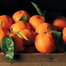 Bulk Oranges Wholesale Fresh Oranges Import Oranges