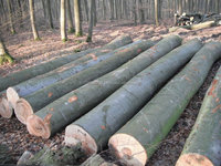 Saw Logs, OAK-ASH-BEECH Available with good prices