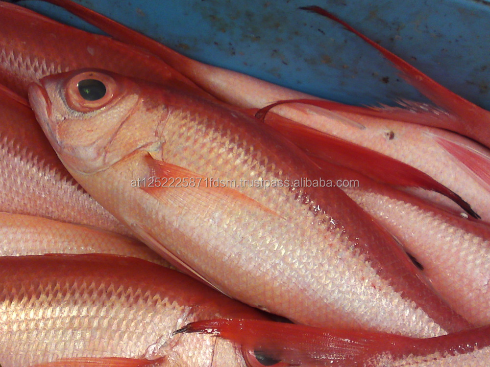 New Season Quality Frozen Red Seabream Fish