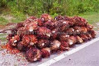 Bulk Palm Oil ready