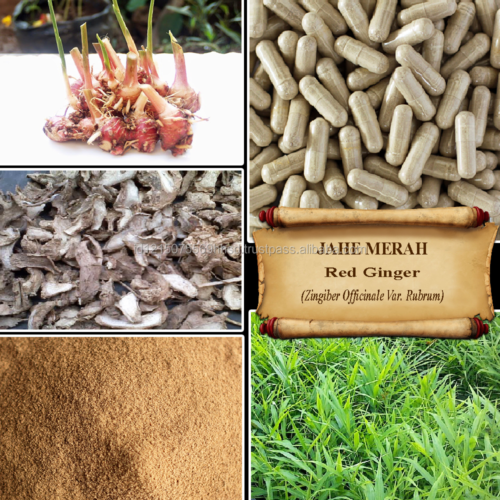 [ORGANIC] RED GINGER / Zingiber Officinale Roxb. / Fresh Powder, Extract, Capsules, Liquid, Oil