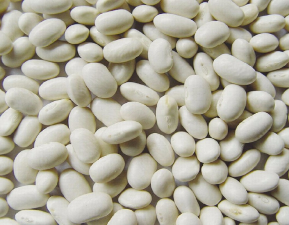 White Kidney Beans- High Quality