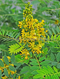 Nutritional and Natural Senna Leaf Powder hike exporters