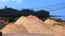 Acacia Wood Chips - Cuts - Sawdust - Wood Shavings, from Ukraine