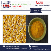 Feed Grade High Quality Dried Yellow Corn Available for Sale at Minimal Market Rate