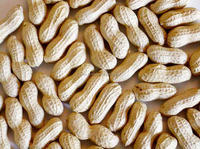 Peanuts , Peanuts in shell , Ground nuts in shell , Shelled Peanuts , Shelled Ground nuts , Cheap Peanuts , Raw Bulk Peanuts