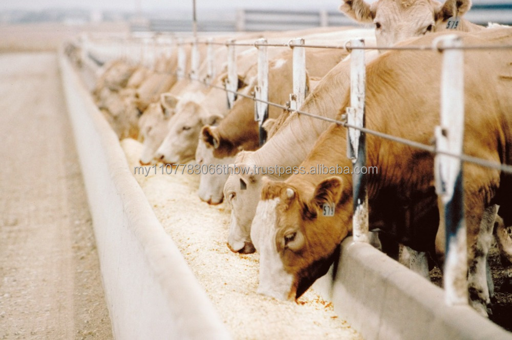 Animal Feed for Cow Ruminant Livestock