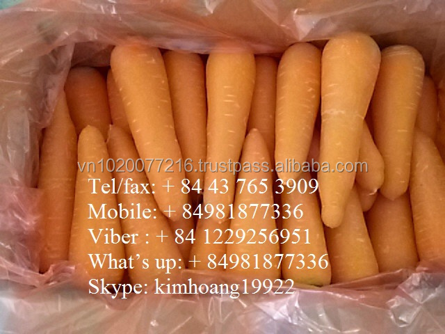 Hot sale: Fresh carrot from Vietnam/ new season