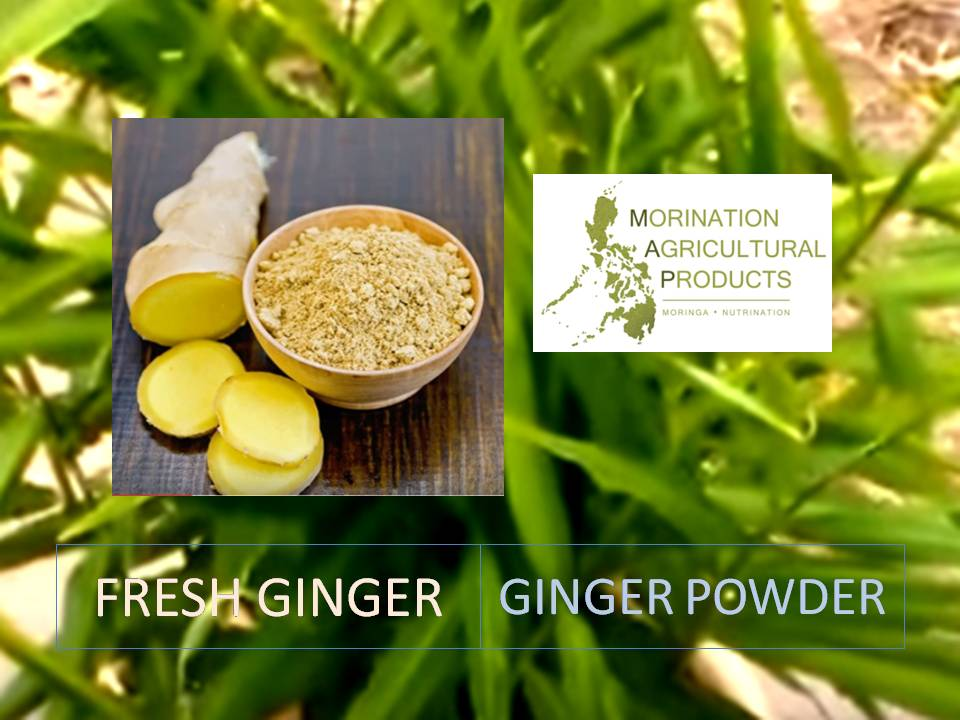 Fresh and Powdered Ginger