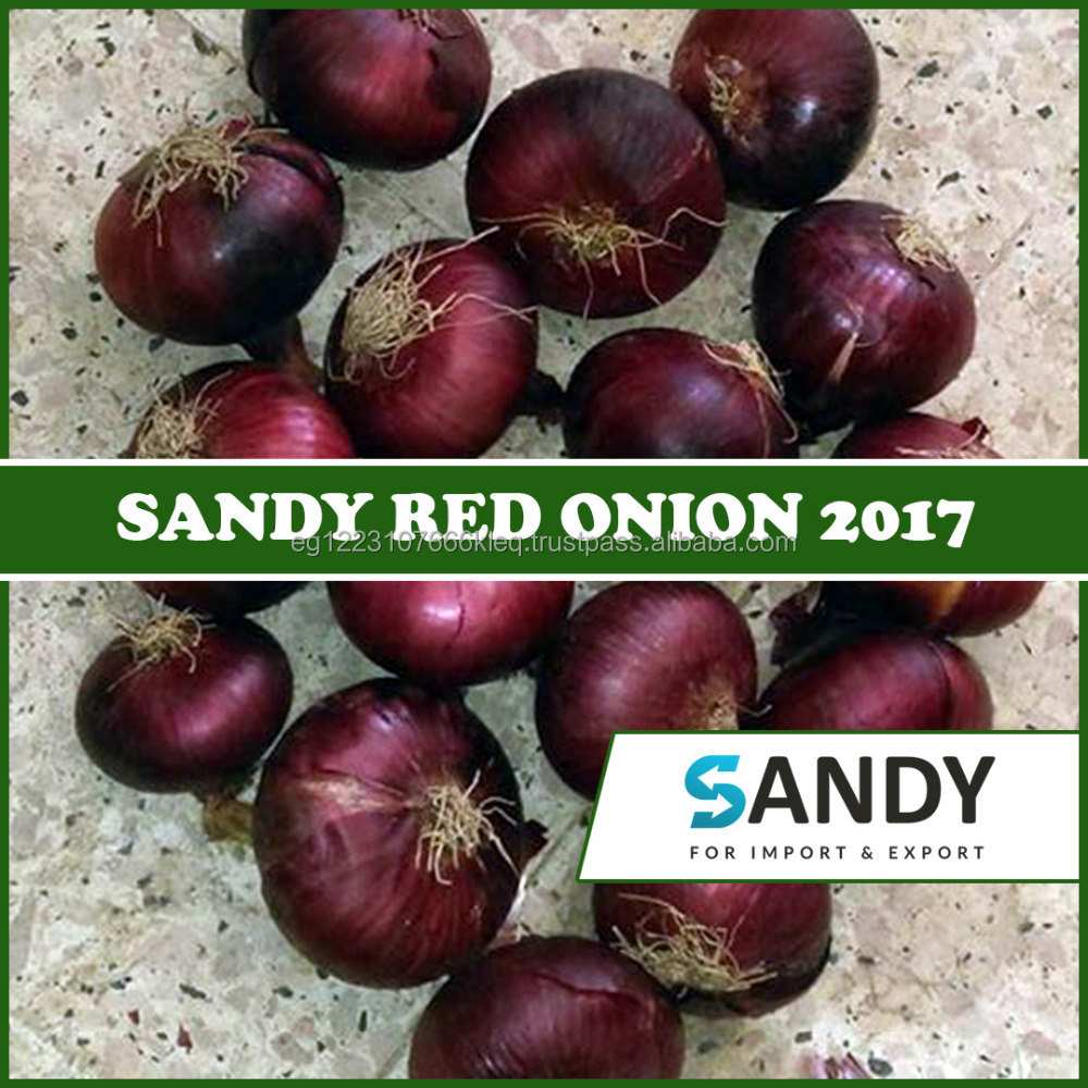 Red Onion From Egypt