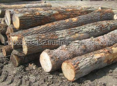 FACTORY PRICE CHEAP AND GOOD QUALITY WOODEN LOGS