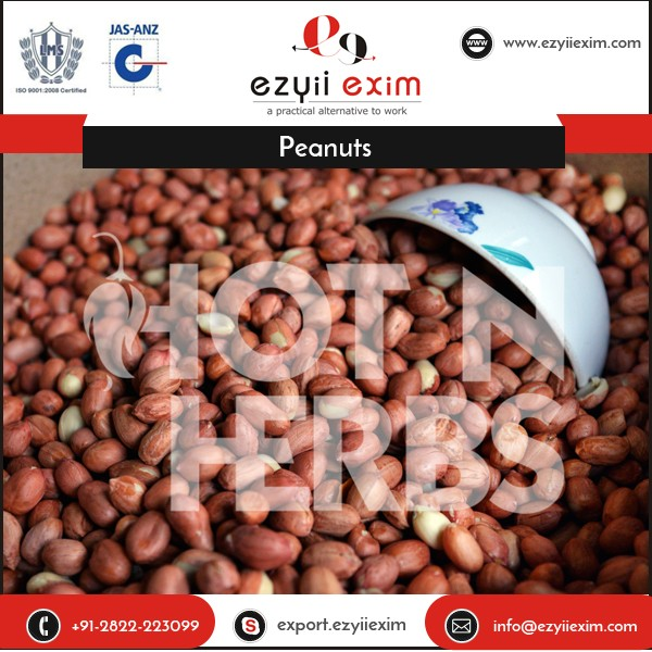 Competitive Price Vitamin Rich 100% Healthy Raw Peanuts