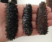 Dried Sea Cucumber, Prickly/ Spiky / Spiny / Thorny