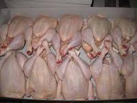 Halal Certified Frozen Whole Chicken From Europe and Brazil