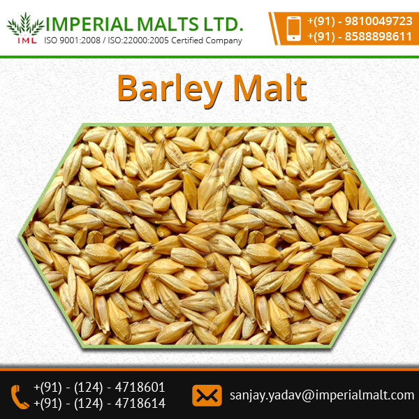 A Grade High Quality Organic Malt Barley for Bulk Sale at Lowest Cost