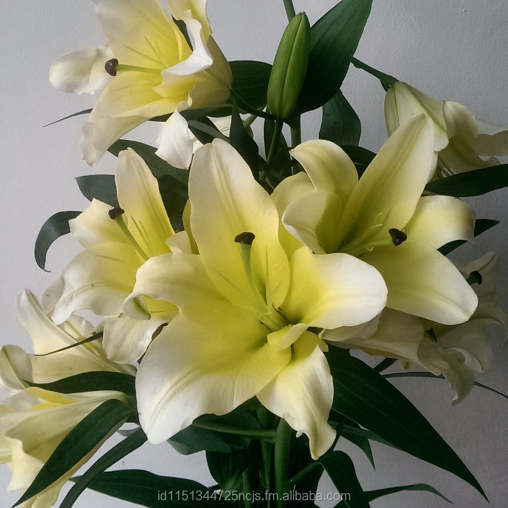 Fresh Cut Lilium