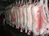 FRESH HALAL SLAUGHTER AUSTRALIAN MUTTON /LAMB/SHEEP