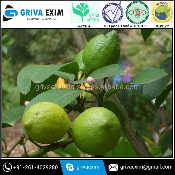 Kashmiri Yellow Green Lemon From Best Suppliers From India